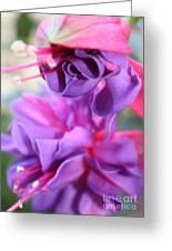 Fuchsia Drama Greeting Card by Carol Groenen