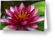 Full Lotus Greeting Card by James Granberry