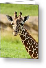 G Is For Giraffe Greeting Card by John Haldane