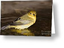 Galapagos Mangrove Warbler Greeting Card by Dave Fleetham - Printscapes