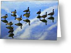 Geese Lake Reflections  Greeting Card by Randy Steele
