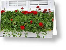 Geraniums On Window Greeting Card by Elena Elisseeva