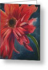 Gerber Daisy 1 Greeting Card by Brandi York