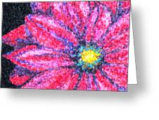 Gerber Daisy Greeting Card by Amanda Schambon