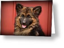 German Shepherd Puppy - Queena Greeting Card by Sandy Keeton