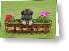 German Shepherd Puppy in Basket Greeting Card by Sandy Keeton