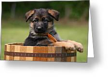 German Shepherd Puppy In Planter Greeting Card by Sandy Keeton