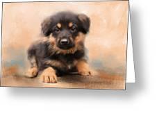 German Shepherd Puppy Portrait Greeting Card by Jai Johnson
