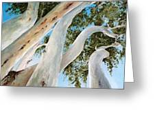 Ghost Gum Snakes Greeting Card by Diko