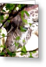 Giraffe Greeting Card by Steven Natanson