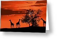 Giraffes At Sunset Greeting Card by Jaroslaw Grudzinski