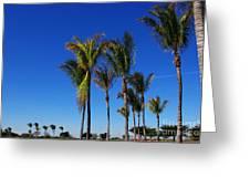 Glorious Palms Greeting Card by Zalman Lazkowicz