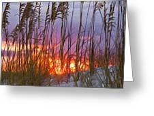 Golden Amber Greeting Card by Janet Fikar