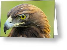 Golden Eagle Greeting Card by Shane Bechler