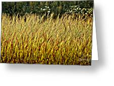 Golden Grasses Greeting Card by Meirion Matthias