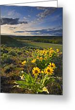 Golden Hills Greeting Card by Mike  Dawson