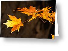 Golden Maple Arch Greeting Card by Ross Powell