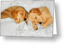 Golden Retriever Dog Puppies Sleeping Greeting Card by Jennie Marie Schell