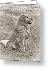 Golden Retriever Dog Sepia Greeting Card by Jennie Marie Schell