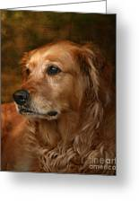 Golden Retriever Greeting Card by Jan Piller