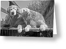Golden Retrievers The Kiss Black And White Greeting Card by Jennie Marie Schell