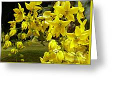 Golden Shower Tree Greeting Card by James Temple