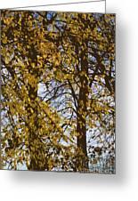 Golden Tree 2 Greeting Card by Carol Lynch