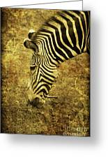 Golden Zebra Greeting Card by Saija  Lehtonen