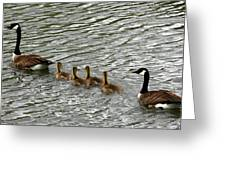 Got All Your Ducks In A Row Greeting Card by David Dunham