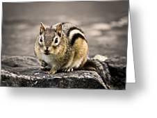 Got Nuts Greeting Card by Evelina Kremsdorf