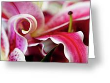 Graceful Lily Series 25 Greeting Card by Olga Yakimenko
