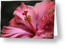 Grand Hibiscus Greeting Card by Sabrina L Ryan