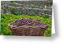 Grape harvest Greeting Card by Gaspar Avila