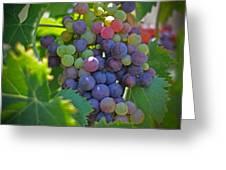 Grapes Greeting Card by Kelly Wade