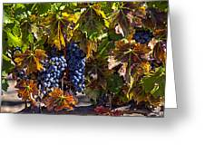 Grapes Of The Napa Valley Greeting Card by Garry Gay