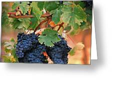Grapes of Tuscany Greeting Card by Dallas Clites