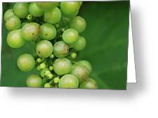 Grapes Greeting Card by Steven Silverwood