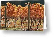 Grapevines After The Harvest Greeting Card by Margaret Hood