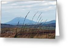 Grass Greeting Card by Paul  Mealey