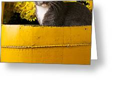 Gray kitten in yellow bucket Greeting Card by Garry Gay