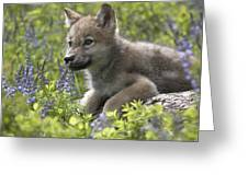 Gray Wolf Canis Lupus Pup Amid Lupine Greeting Card by Tim Fitzharris