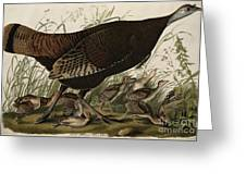 Great American Hen And Young Greeting Card by John James Audubon