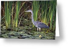 Great Blue Heron Greeting Card by Natural Selection David Spier