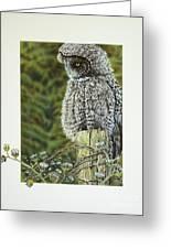 Great Grey Owl Greeting Card by Greg Halom