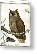 Great Horned Owl Greeting Card by Charles Harden