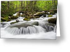 Great Smoky Mountain Roaring Fork Spring Cascade Greeting Card by Mark VanDyke