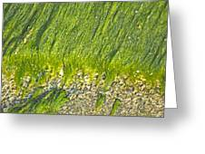 Green Algae On Rock Greeting Card by Kenneth Albin
