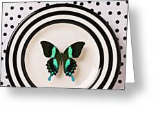 Green and black butterfly on plate Greeting Card by Garry Gay