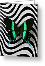 Green And Black Butterfly On Wavey Lines Greeting Card by Garry Gay