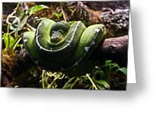 Green Boa Greeting Card by Douglas Barnett